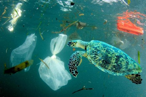 Consistent misuse of plastic is causing long-term damage to the earth.